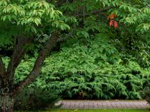 Kävelyllä puutarhassa