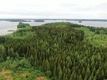 Saaren puustoisimmat kuviot 58,60 ja 53