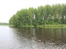 Näkymä järveltä mökin suuntaan