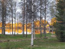 Pihasta ihana näkymä Ranua järvelle