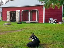 Aitassa kaksi kesähuonetta, tilaa puille ja koiratarha takana.