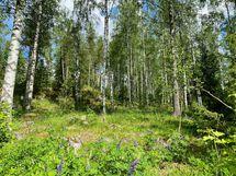 Komea koivikkorinne nouseen tontin toiselta laidalta luoden suojaa ja mukavaa vaihtelua maastoon.