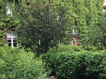 Sisäpihan vehreyttä kesällä (omistajan kuva)