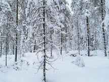 Yhtiö sijaitsee metsän laidassa, koskematon luonto aivan äärellä
