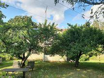 Omenapuita