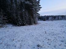 Peltoa ja metsän kulmaa