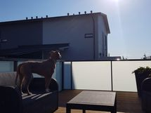 ja aurinkoinen kattoterassi