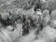 Tontti on kahden pihan välissä sijaitseva metsäalue.