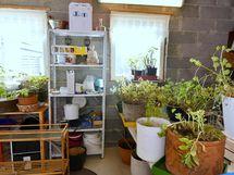 alakerrassa tilaa kasvien talvehtia