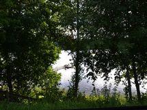 Lähellä Oinasjärven uimaranta